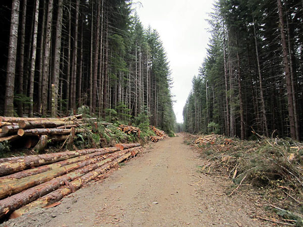 Logging Roads in British Colmbia